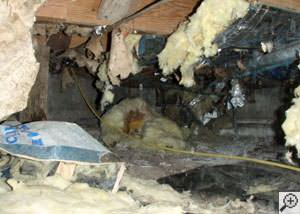 A messy crawl space filled with rotting insulation and debris in Ventor City.