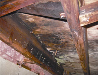 mold and rot in a Sicklerville crawl space