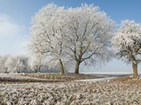 Frost on a grassy hill with a frost-covered tree.