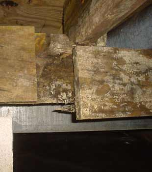 Extensive basement rot found in Clementon by Dry Guys Basement Systems