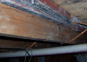 Rotting, decaying wood from mold damage in Margate City